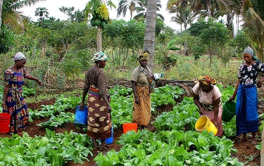 Philanthropy in Africa - Plowing the fields